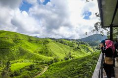 The most beautiful landscape at tea plantation in Malaysia Royalty Free Stock Images