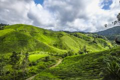 The most beautiful landscape at tea plantation in Malaysia. During the holiday Stock Images