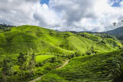 The most beautiful landscape at tea plantation in Malaysia. During the holiday Stock Photos