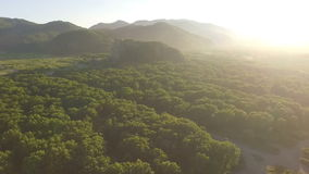 The most beautiful scenery of nature. Flying above the trees. Sun at sunset shining into the camera. stock video footage