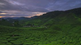 The most beautiful time lapse of landscape at tea plantation stock video