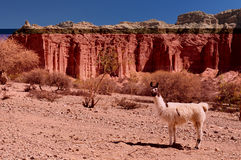 The most beautifull countryside in Bolivia Stock Photo