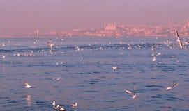 most bosfor promie Istanbul przechodzącego indyk Obraz Royalty Free