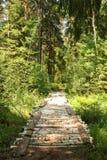 Most brzoza bagażniki nad lasowym strumieniem iść głęboko w las obraz stock