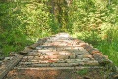Most brzoza bagażniki nad lasowym strumieniem iść głęboko w las obrazy stock