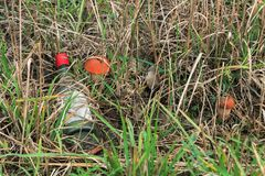 Most environmentally friendly mushroom. Most environmentally friendly mushroom in the autumn forest Stock Image