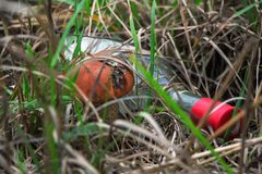 Most environmentally friendly mushroom. Most environmentally friendly mushroom in the autumn forest Stock Photo