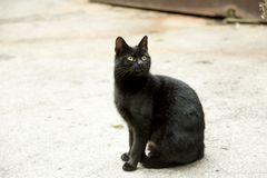 Meaning of the black cat symbol. Most of Europe considers the black cat a symbol of bad luck, particularly if one walks across the path in front of a person royalty free stock image