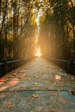 Most i, liście barwimy zmianę Obraz Royalty Free