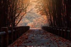 Most i, liście barwimy zmianę Fotografia Royalty Free