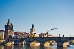 Most i ptak obrazy royalty free
