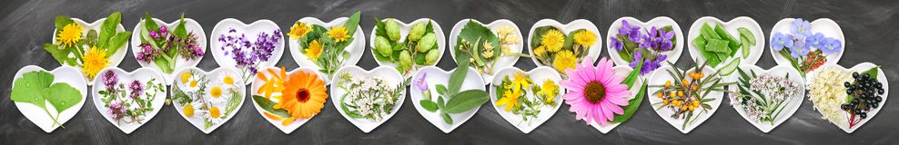 The most important medicinal plants. On ceramic bowls in heart shape, slate background royalty free stock photography