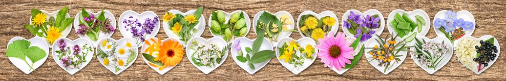 The most important medicinal plants. On ceramic bowls in heart shape, wooden background stock photos