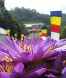 Temple of tooth, srilanka, kandy, louts flower stock photos