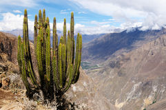 The most interesting places of South America, Colca canyon in Peru Stock Photography