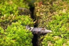 Most mrówka Zdjęcie Royalty Free