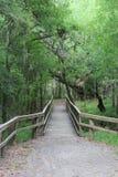 Most Nad misi rzeką w parku Obraz Royalty Free