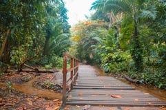Most nad rzeką na lasu tropikalnego śladzie zdjęcie stock
