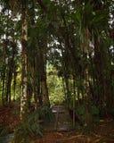Most Nad zatoczką w dżungli Fotografia Stock
