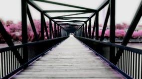 Most Nowy świat fotografia royalty free