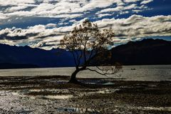 The most photographed tree in New Zealand. Stock Photos