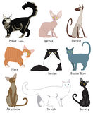 Most Popular Cat Breeds. Whimsical colorful vector illustration of the most popular cat breeds Stock Photography