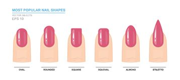 Most popular nail shapes. Different kinds of nail shapes. Manicure Guide stock illustration