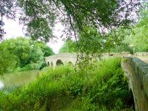 Most przez drzew fotografia royalty free