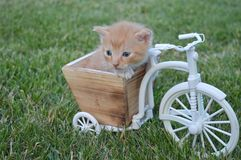 The most sweet Cat baby playing on a bicicle stock photography