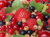 The most tasty and useful berries Stock Images