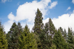 Most trees and blue sky Royalty Free Stock Photography