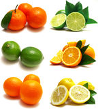 The most useful citrus Stock Images