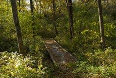 Most w Żółtych drewnach Obraz Stock