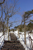 Most w śniegu Zdjęcie Stock