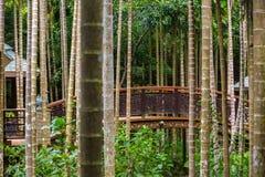 Most w dżungli Yalong zatoki zwrotnika raju lasu park, brzęczenia obraz royalty free