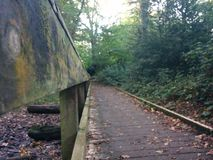 Most w Forrest Zdjęcia Royalty Free