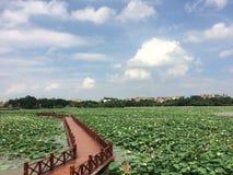 Most w lotosowym jeziorze Obrazy Royalty Free
