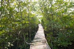 most w namorzynowym lesie Zdjęcia Stock