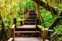 Most w tropikalnym las tropikalny Obraz Royalty Free