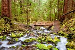 Most zol Duc i ślad Spadamy, Olimpijski park narodowy, Wa fotografia royalty free