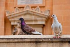 Mosta Malta Historic city Royalty Free Stock Photography