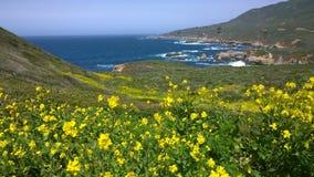 Mostarda do amarelo da costa de Califórnia Foto de Stock