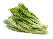 Mostarda verde fresca imagem de stock