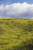 Mostaza amarilla y nubes blancas, camino de Canada del La en primavera, cerca de Ventura, California, los E.E.U.U. Imagen de archivo libre de regalías