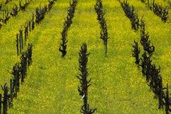 Mostaza en viñedo Imagen de archivo