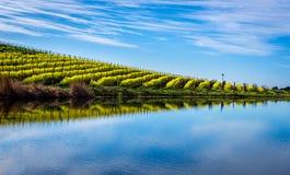 Mostaza floreciente reflejada en el agua Fotografía de archivo