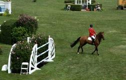 Mostra clássica do cavalo de Hampton fotos de stock royalty free