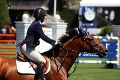 Mostra clássica do cavalo de Hampton fotografia de stock royalty free