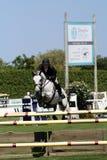 Mostra clássica do cavalo de Hampton imagem de stock royalty free
