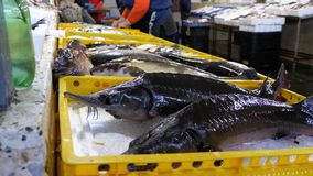 Mostra com os peixes de mar frescos no gelo no mercado de rua vídeos de arquivo